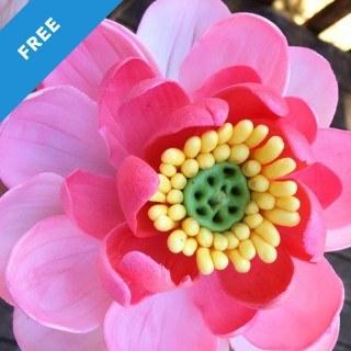 Gumpaste Lotus Flower