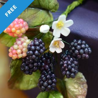 Easy Sugar Blackberry Tutorial