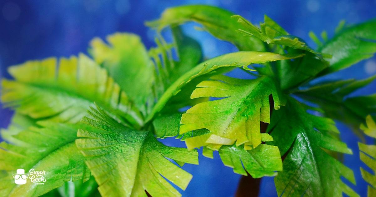 Edible Palm Trees