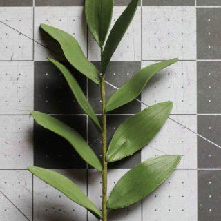 gumpaste ruscus tutorial
