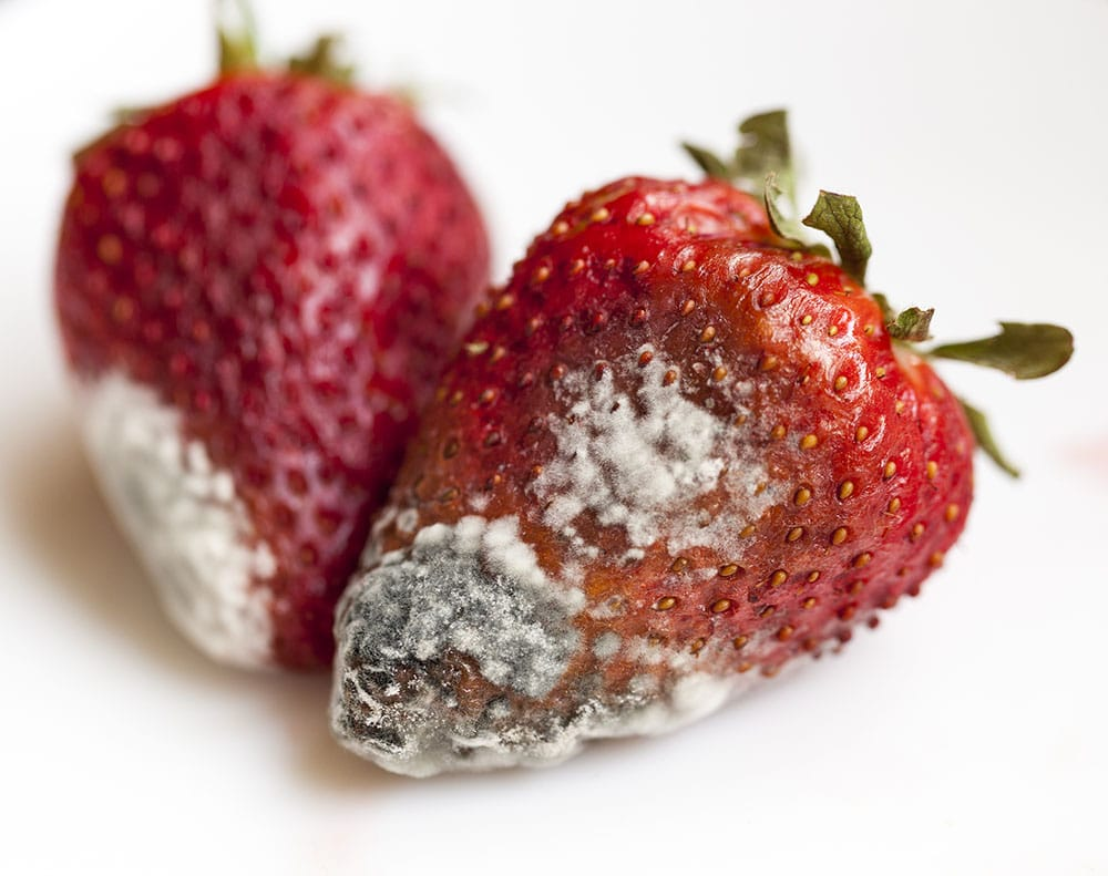 closeup of strawberry with mold