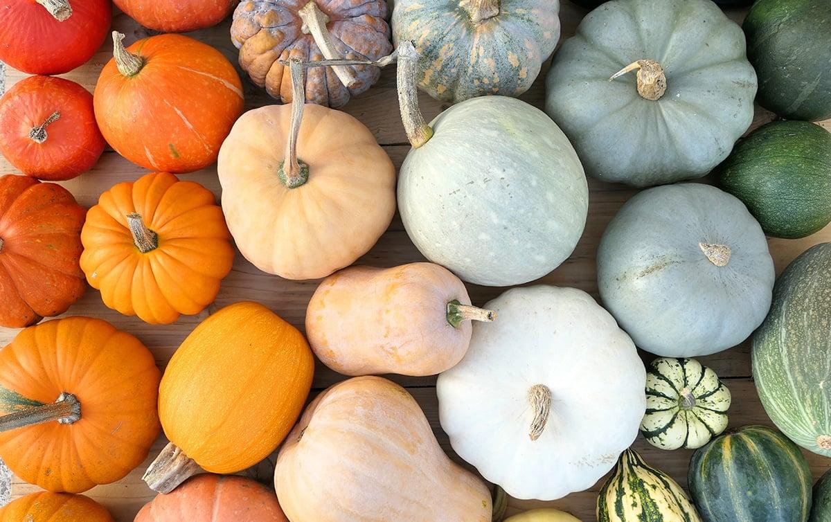 different types of pumpkins for pumpkin puree