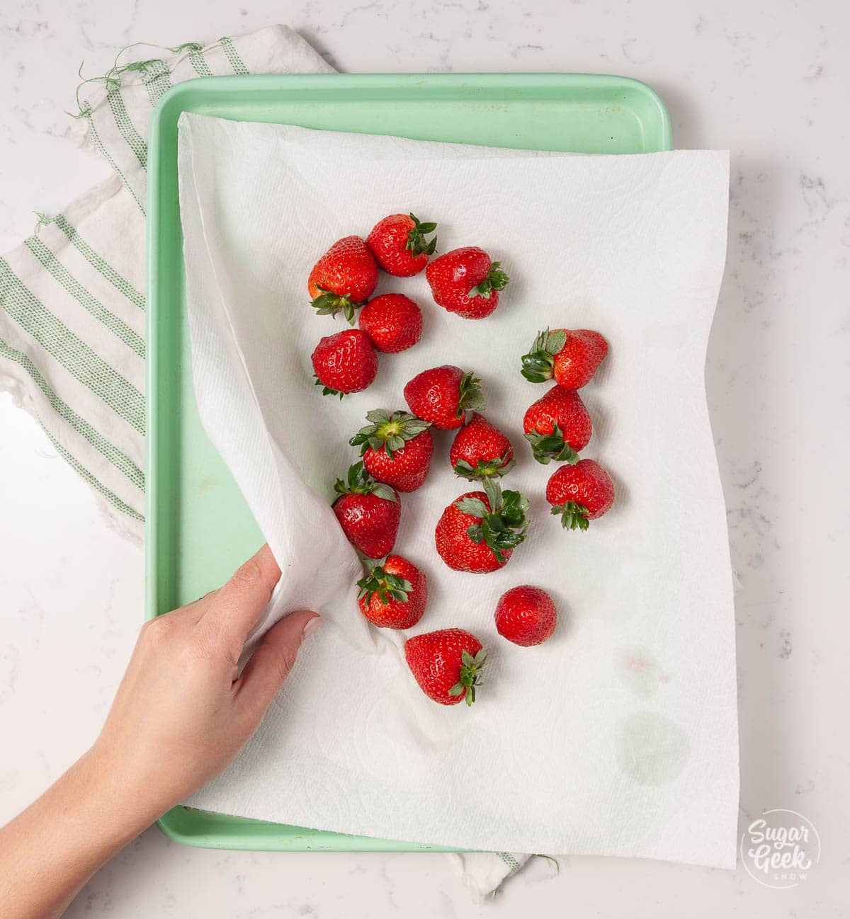 strawberries on paper towels on a green cookie sheet shot from above with a hand